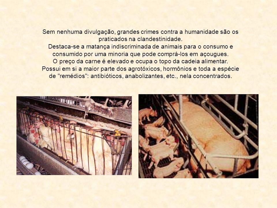 Foto: Rildo Silveira Comer Carne Crime contra a Humanidade Adaptado de Olavo Desimon Ref.