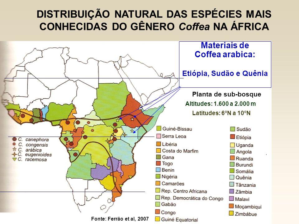 DISTRIBUIÇÃO NATURAL DAS ESPÉCIES MAIS CONHECIDAS DO GÊNERO Coffea NA ÁFRICA Materiais de Coffea arabica: Etiópia, Sudão e Quênia Fonte: Ferrão et al,