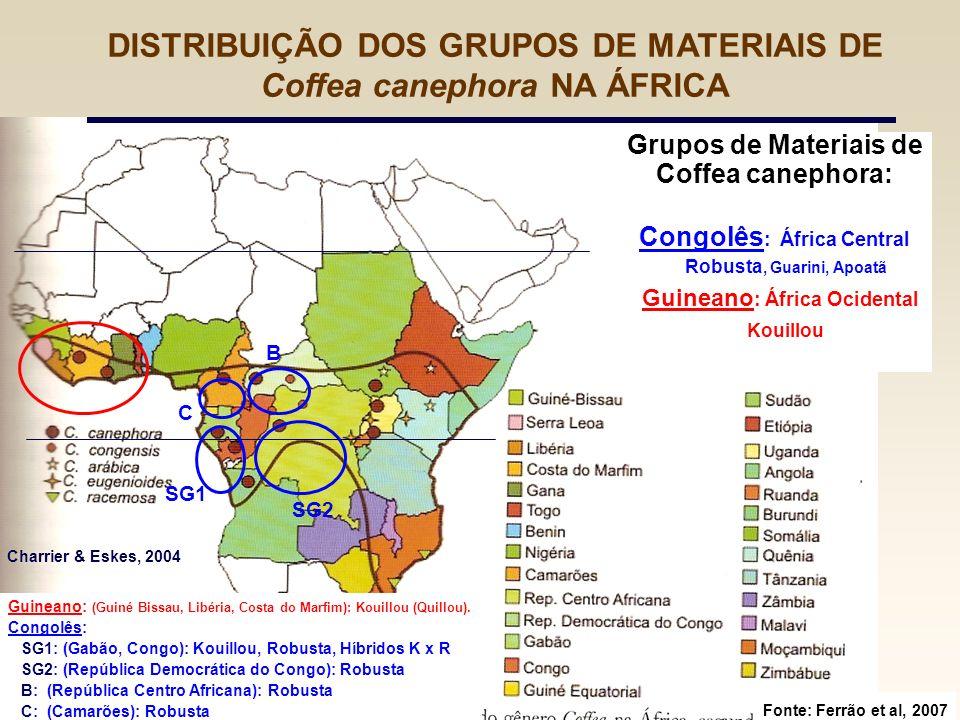 Grupos de Materiais de Coffea canephora: Congolês : África Central Robusta, Guarini, Apoatã Guineano : África Ocidental Kouillou Fonte: Ferrão et al,