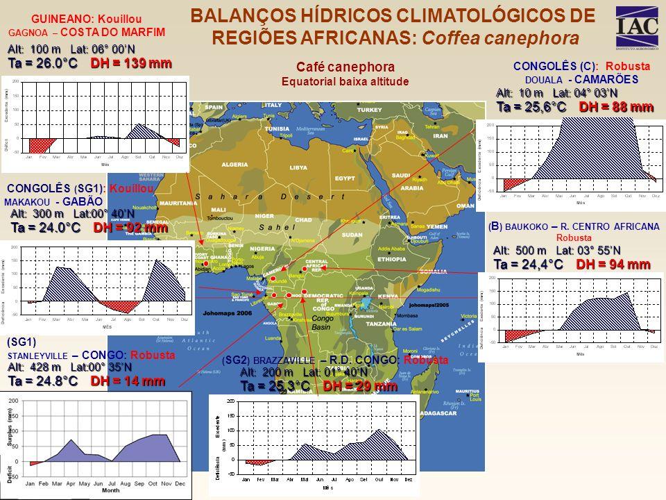 Alt: 428 m Lat:00° 35N Ta = 24.8°C DH = 14 mm (SG1) STANLEYVILLE – CONGO: Robusta Café canephora Equatorial baixa altitude Alt: 100 m Lat: 06° 00N Ta