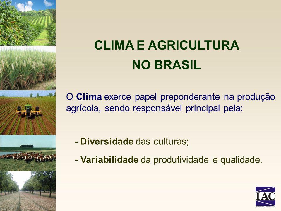 O Clima exerce papel preponderante na produção agrícola, sendo responsável principal pela: CLIMA E AGRICULTURA NO BRASIL - Diversidade das culturas; -