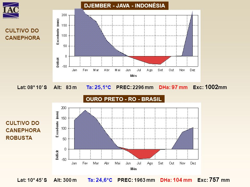 DJEMBER - JAVA - INDONÉSIA OURO PRETO - RO - BRASIL CULTIVO DO CANEPHORA ROBUSTA CULTIVO DO CANEPHORA Lat: 08° 10 S Alt: 83 m Ta: 25,1 °C PREC: 2296 m