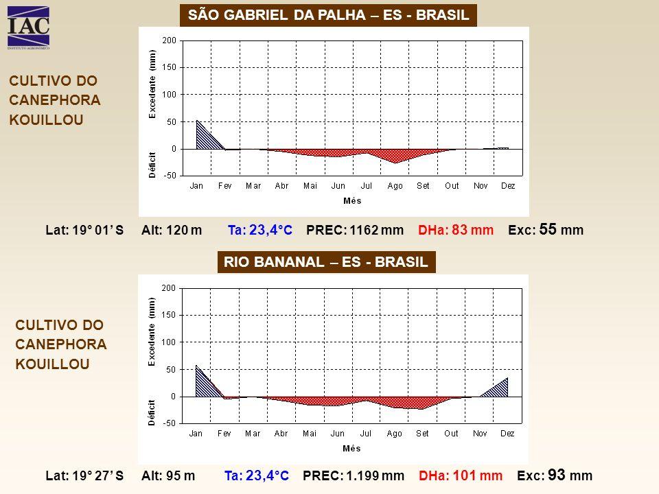 SÃO GABRIEL DA PALHA – ES - BRASIL RIO BANANAL – ES - BRASIL CULTIVO DO CANEPHORA KOUILLOU CULTIVO DO CANEPHORA KOUILLOU Lat: 19° 01 S Alt: 120 m Ta: