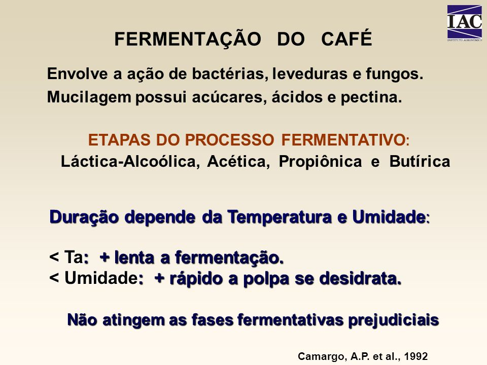 FERMENTAÇÃO DO CAFÉ Camargo, A.P. et al., 1992 Envolve a ação de bactérias, leveduras e fungos. Mucilagem possui acúcares, ácidos e pectina. ETAPAS DO