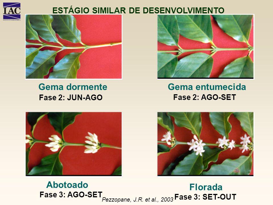 Gema dormente Florada Gema entumecida Abotoado Fase 2: JUN-AGO Fase 2: AGO-SET Fase 3: AGO-SET Fase 3: SET-OUT Pezzopane, J.R. et al., 2003 ESTÁGIO SI