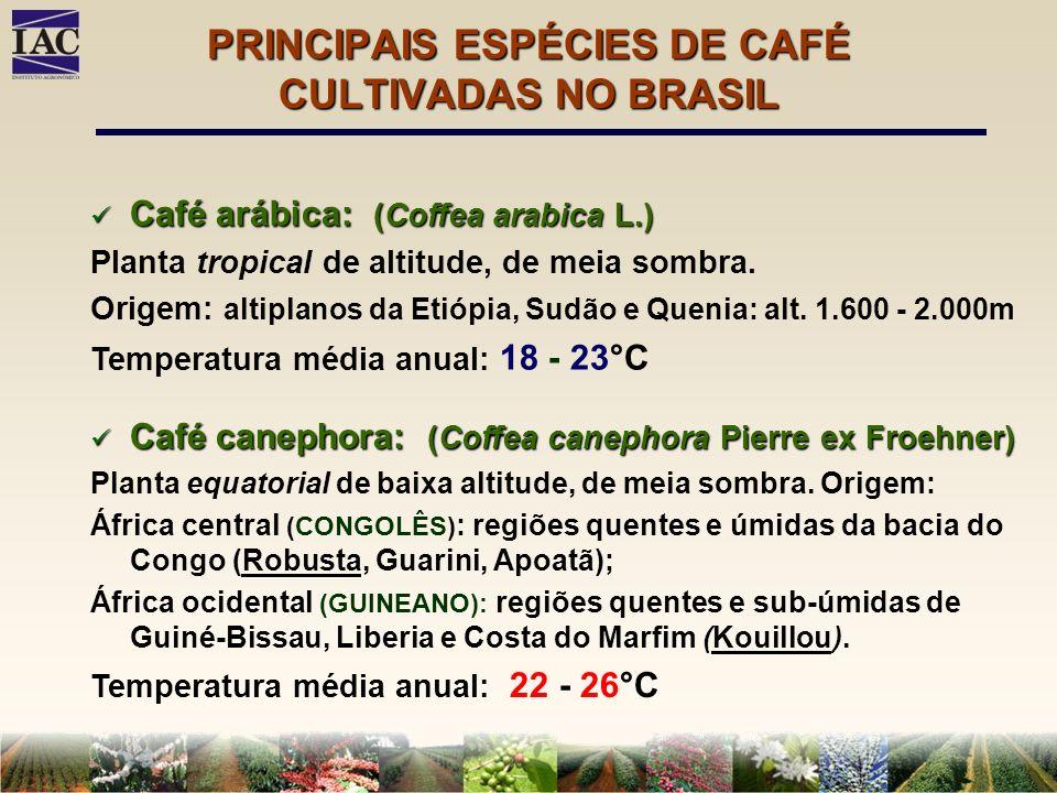PRINCIPAIS ESPÉCIES DE CAFÉ CULTIVADAS NO BRASIL Café arábica: (Coffea arabica L.) Café arábica: (Coffea arabica L.) Planta tropical de altitude, de m