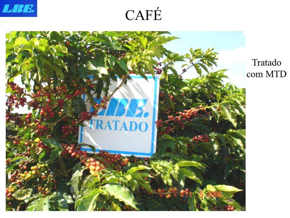 CAFÉ Tratado com MTD