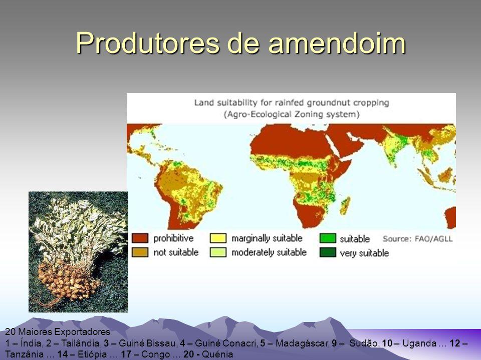 Produtores de amendoim 20 Maiores Exportadores 1 – Índia, 2 – Tailândia, 3 – Guiné Bissau, 4 – Guiné Conacri, 5 – Madagáscar, 9 – Sudão, 10 – Uganda … 12 – Tanzânia … 14 – Etiópia … 17 – Congo … 20 - Quénia