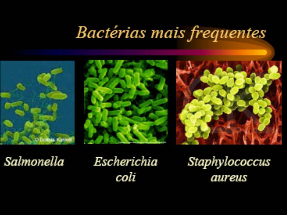 PATÓGENO Salmonella spp Escherichia coli O157:H7 Vibrio cholerae A.