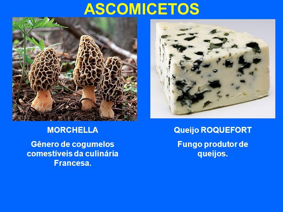 ASCOMICETOS MORCHELLA Gênero de cogumelos comestíveis da culinária Francesa. Queijo ROQUEFORT Fungo produtor de queijos.