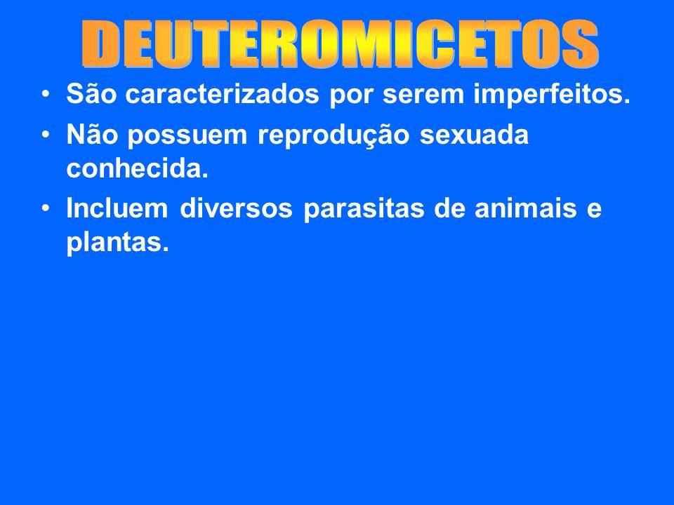 São caracterizados por serem imperfeitos. Não possuem reprodução sexuada conhecida. Incluem diversos parasitas de animais e plantas.