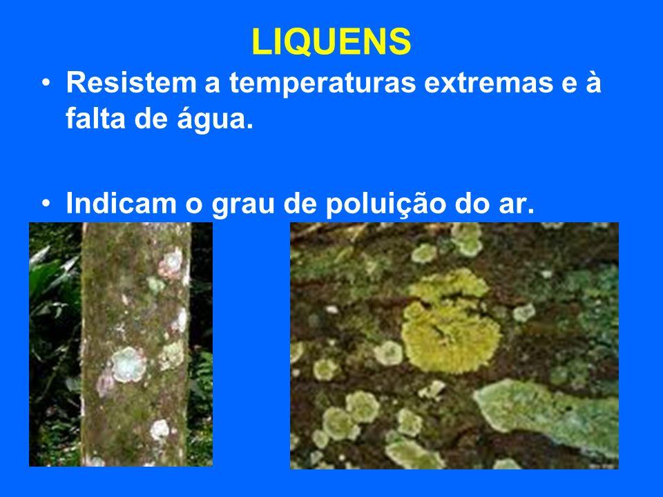 LIQUENS Resistem a temperaturas extremas e à falta de água. Indicam o grau de poluição do ar.