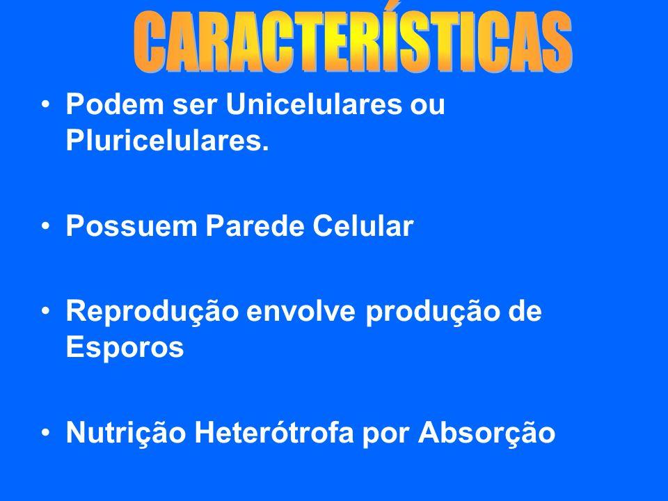 Podem ser Unicelulares ou Pluricelulares. Possuem Parede Celular Reprodução envolve produção de Esporos Nutrição Heterótrofa por Absorção