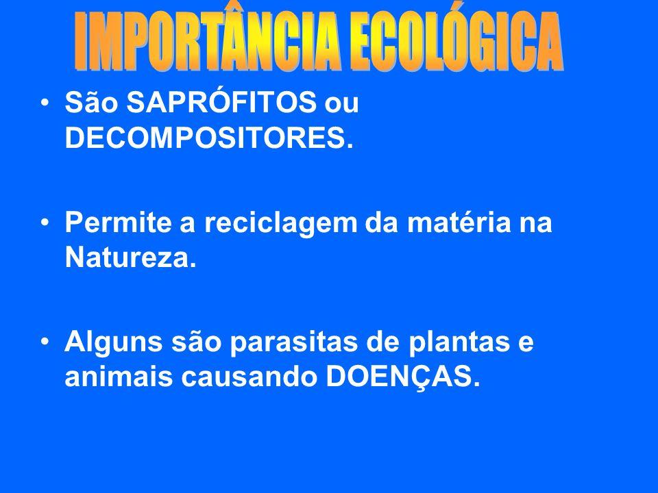 São SAPRÓFITOS ou DECOMPOSITORES. Permite a reciclagem da matéria na Natureza. Alguns são parasitas de plantas e animais causando DOENÇAS.