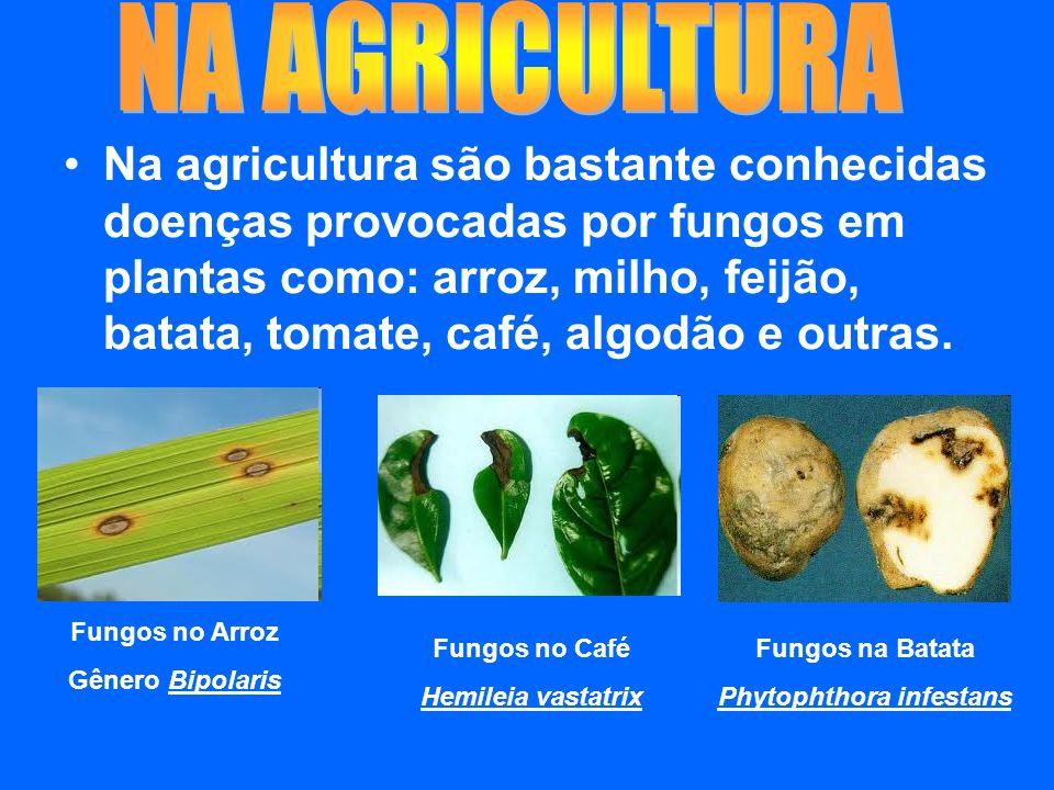 Na agricultura são bastante conhecidas doenças provocadas por fungos em plantas como: arroz, milho, feijão, batata, tomate, café, algodão e outras.