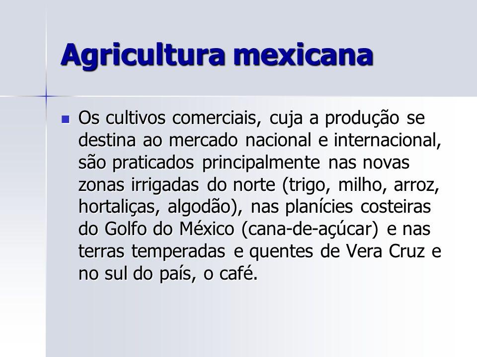 Agricultura mexicana Os cultivos comerciais, cuja a produção se destina ao mercado nacional e internacional, são praticados principalmente nas novas zonas irrigadas do norte (trigo, milho, arroz, hortaliças, algodão), nas planícies costeiras do Golfo do México (cana-de-açúcar) e nas terras temperadas e quentes de Vera Cruz e no sul do país, o café.