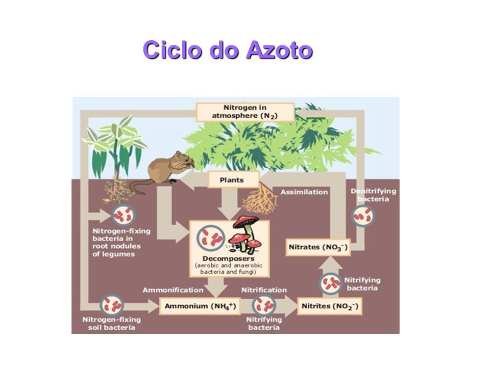 Ciclo do Azoto
