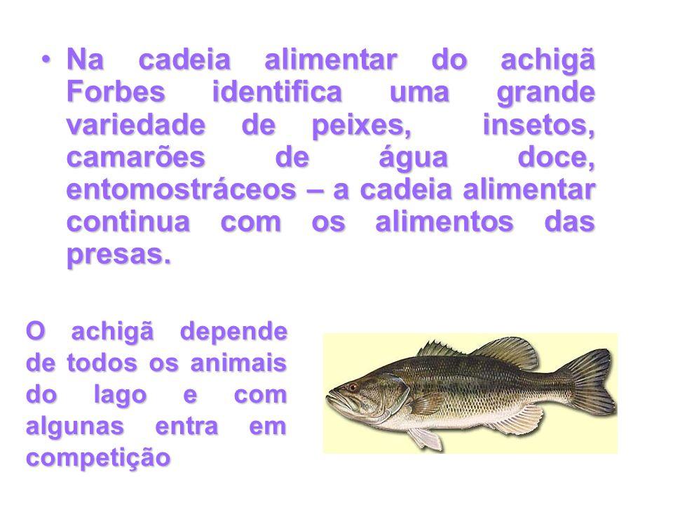 Na cadeia alimentar do achigã Forbes identifica uma grande variedade de peixes, insetos, camarões de água doce, entomostráceos – a cadeia alimentar co