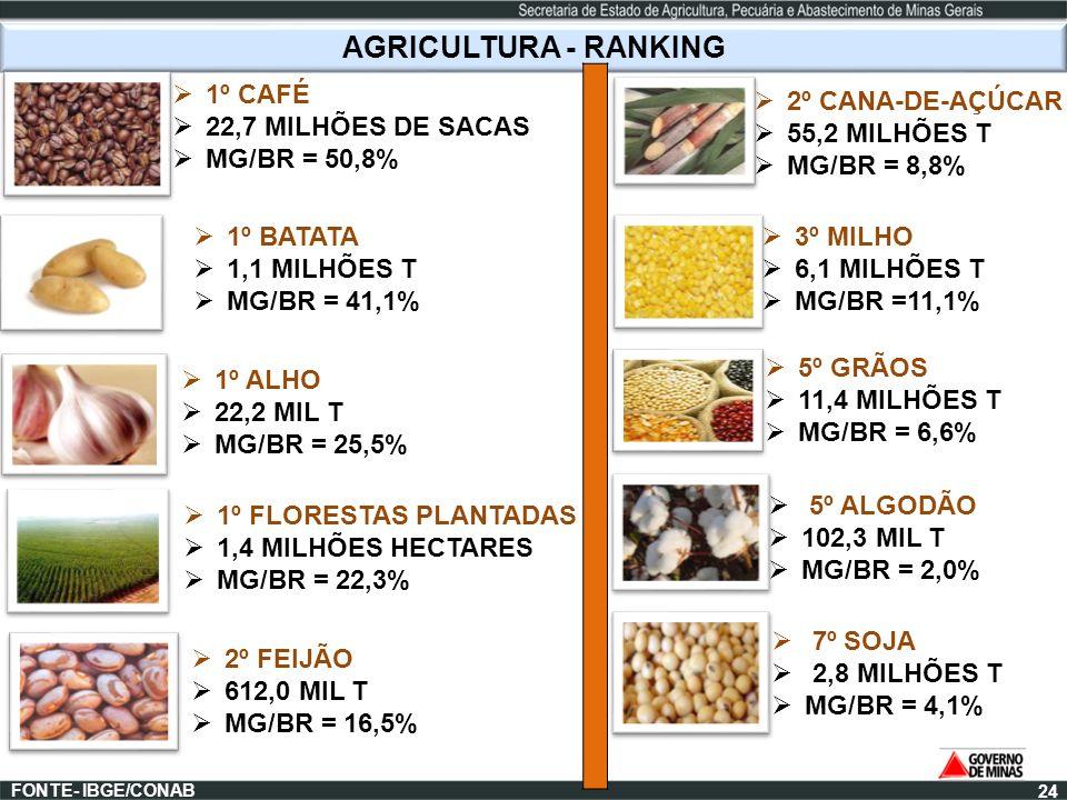 AGRICULTURA - RANKING 2º CANA-DE-AÇÚCAR 55,2 MILHÕES T MG/BR = 8,8% FONTE- IBGE/CONAB 1º CAFÉ 22,7 MILHÕES DE SACAS MG/BR = 50,8% 1º BATATA 1,1 MILHÕE