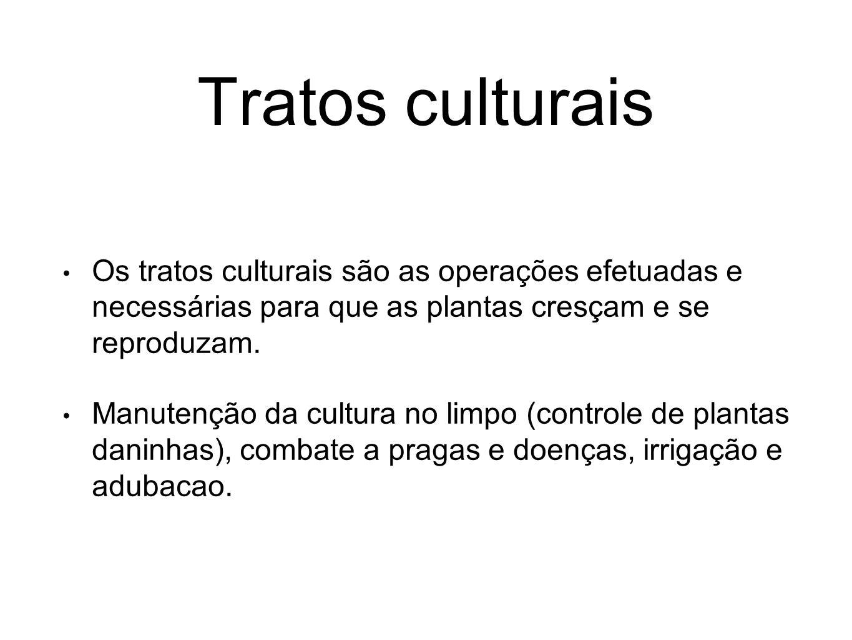 Tratos culturais Os tratos culturais são as operações efetuadas e necessárias para que as plantas cresçam e se reproduzam. Manutenção da cultura no li