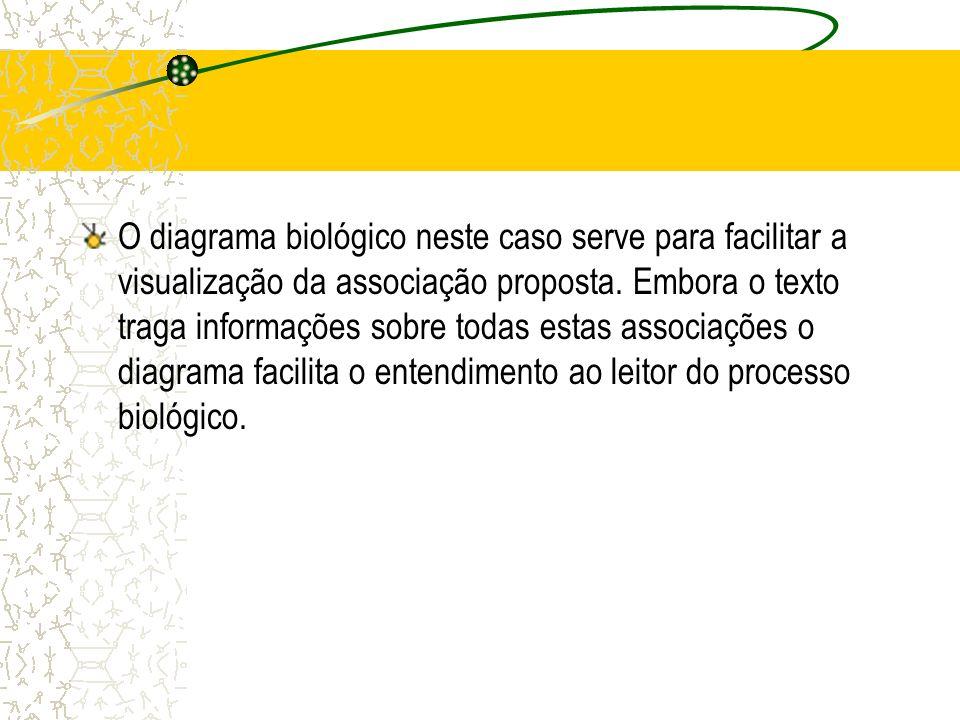 O diagrama biológico neste caso serve para facilitar a visualização da associação proposta. Embora o texto traga informações sobre todas estas associa
