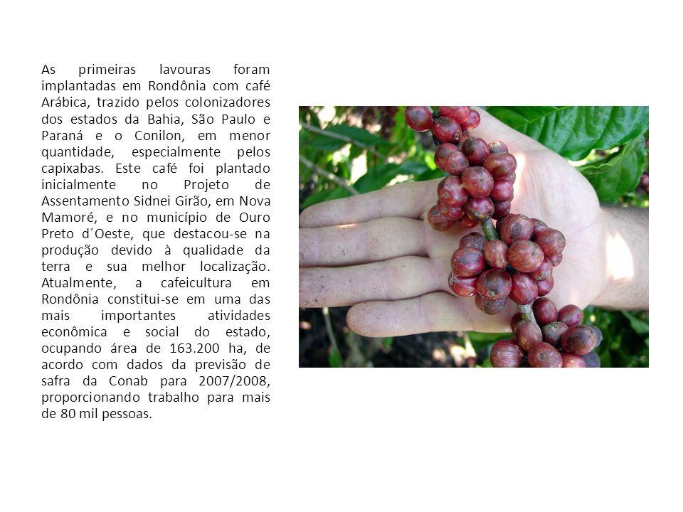 As primeiras lavouras foram implantadas em Rondônia com café Arábica, trazido pelos colonizadores dos estados da Bahia, São Paulo e Paraná e o Conilon