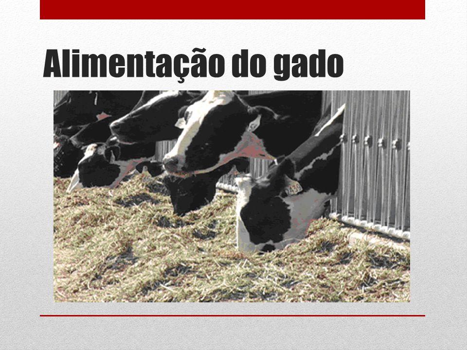 Alimentação do gado