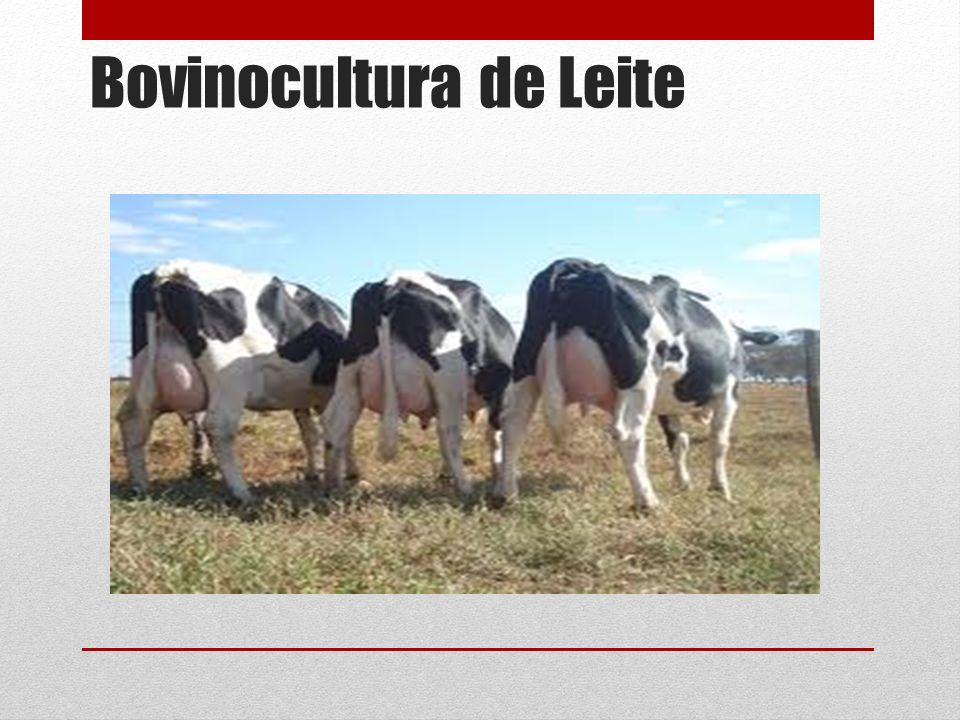 Introdução O Brasil é detentor de um dos maiores rebanhos comerciais bovino do mundo.