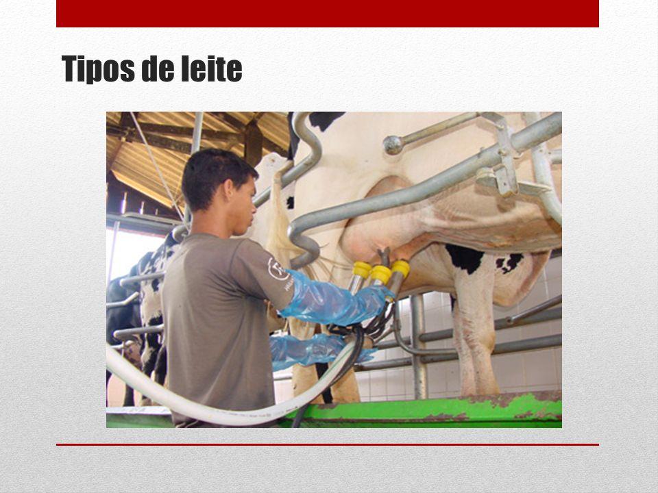 Tipos de leite
