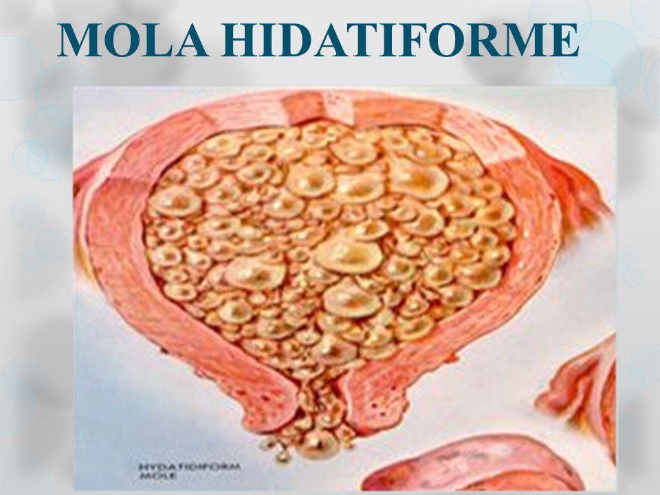 Evolução Normal da Gestação Divisão Celular Fecundação Ciclo Menstrual