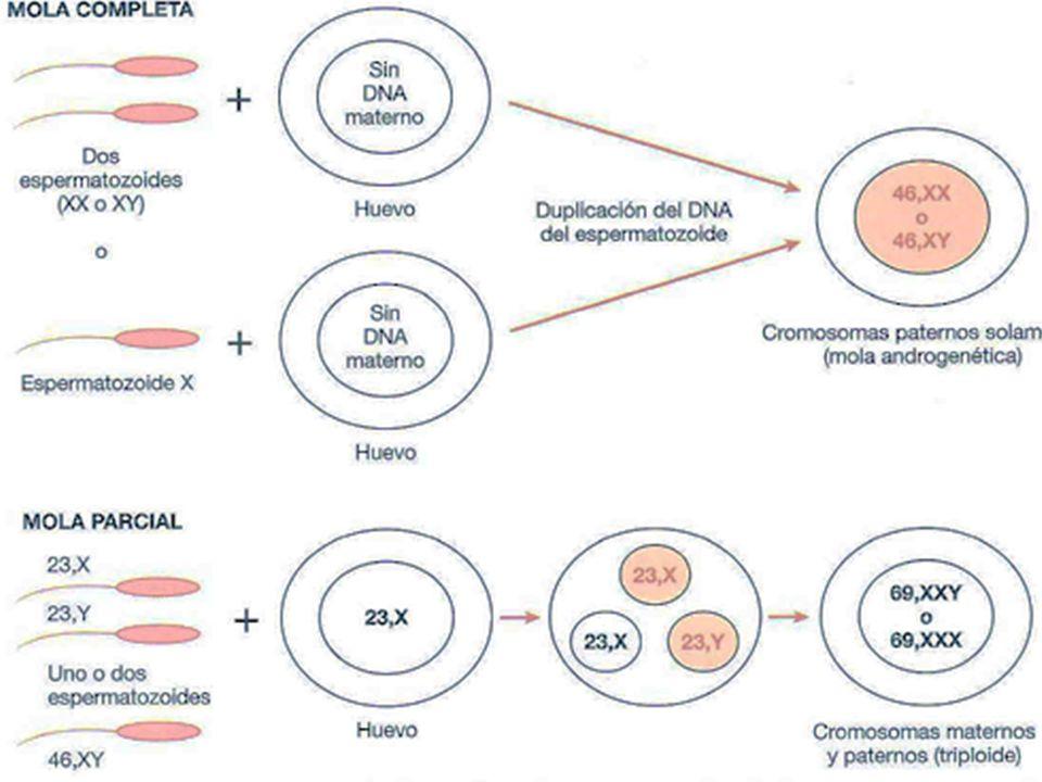 QUIMIOTERAPIA Metotrexato é indicado no tratamento de coriocarcinoma gestacional, e mola hidatiforme.