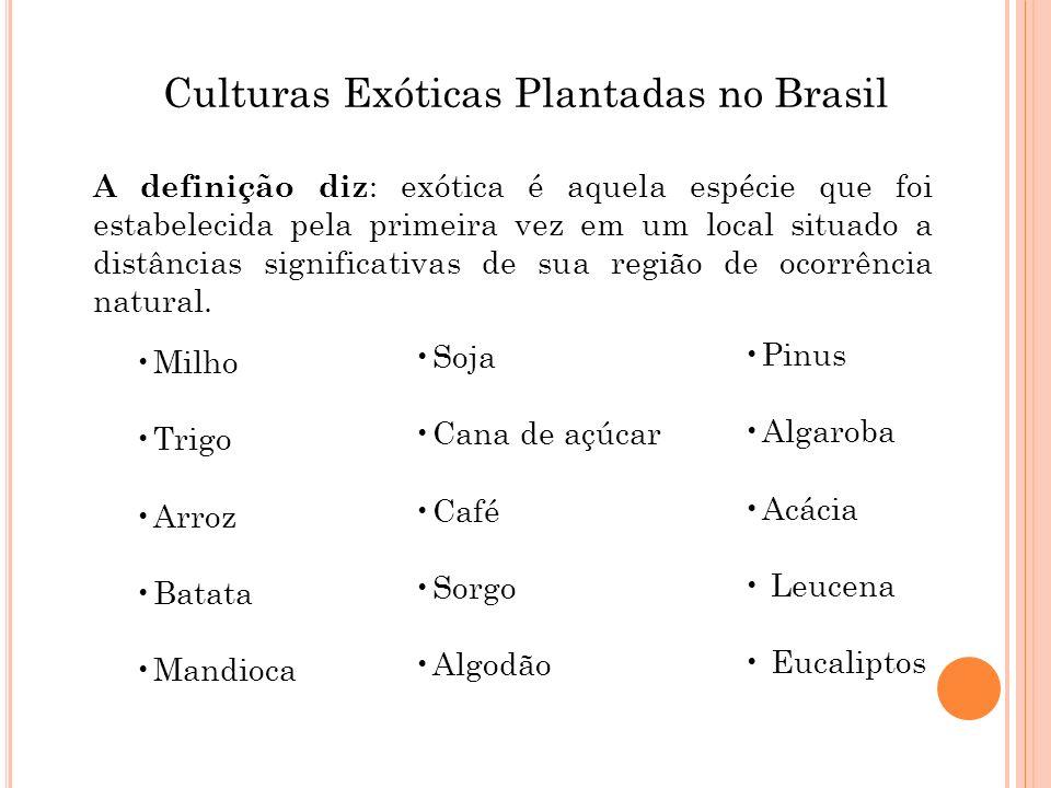 Culturas Exóticas Plantadas no Brasil A definição diz : exótica é aquela espécie que foi estabelecida pela primeira vez em um local situado a distânci