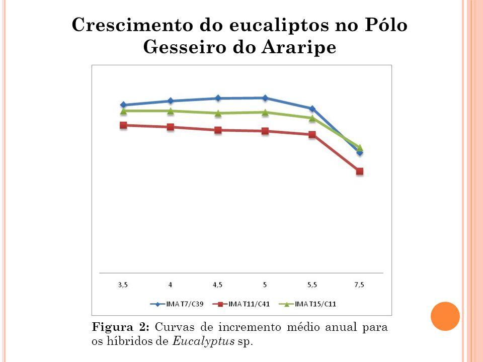 Crescimento do eucaliptos no Pólo Gesseiro do Araripe Figura 2: Curvas de incremento médio anual para os híbridos de Eucalyptus sp.