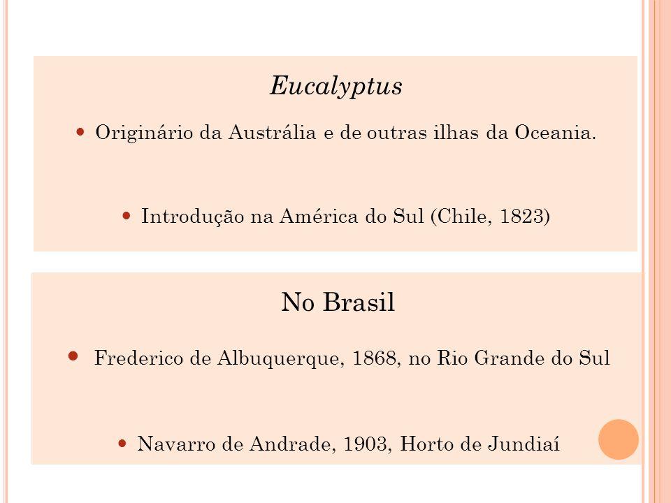 Eucalyptus Originário da Austrália e de outras ilhas da Oceania. Introdução na América do Sul (Chile, 1823) No Brasil Frederico de Albuquerque, 1868,