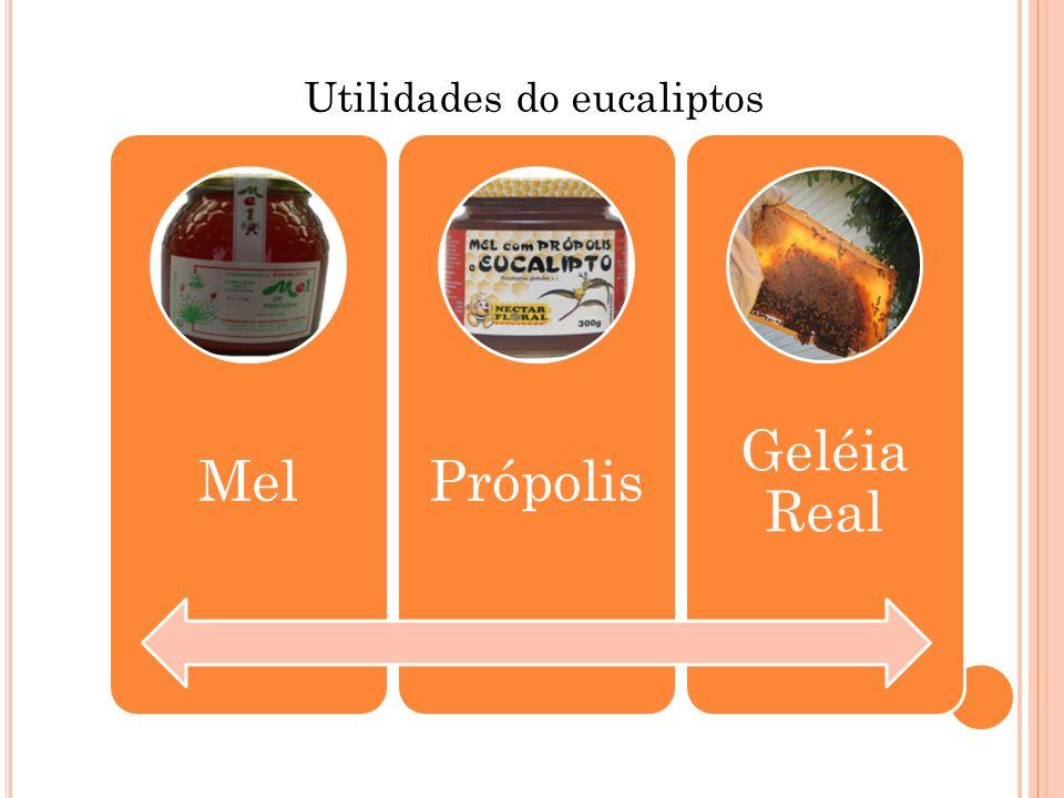 Utilidades do eucaliptos MelPrópolis Geléia Real