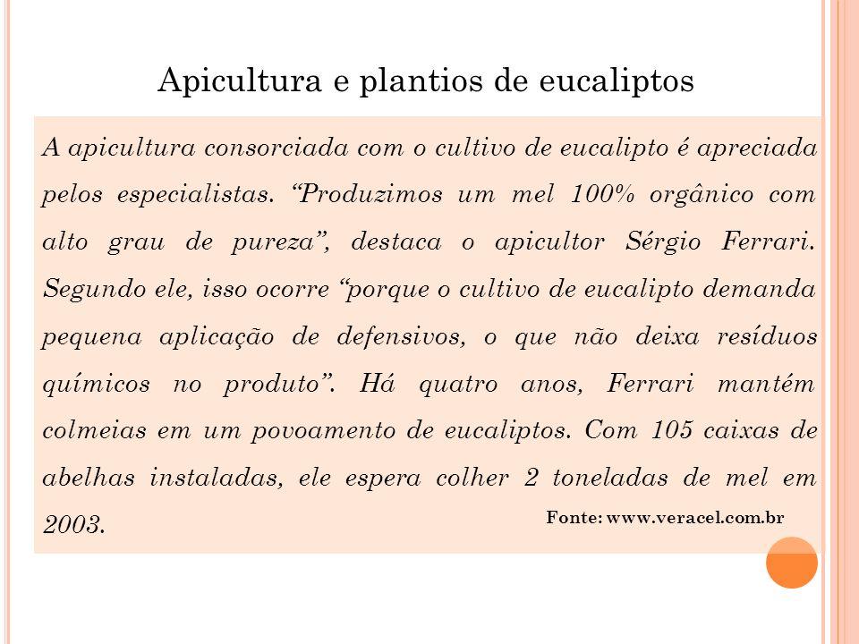 A apicultura consorciada com o cultivo de eucalipto é apreciada pelos especialistas. Produzimos um mel 100% orgânico com alto grau de pureza, destaca