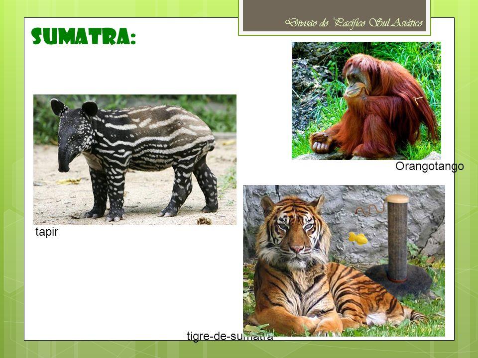 Divisão do Pacífico Sul Asiático sumatra: tapir Orangotango tigre-de-sumatra