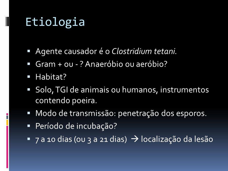 Etiologia Agente causador é o Clostridium tetani. Gram + ou - ? Anaeróbio ou aeróbio? Habitat? Solo, TGI de animais ou humanos, instrumentos contendo