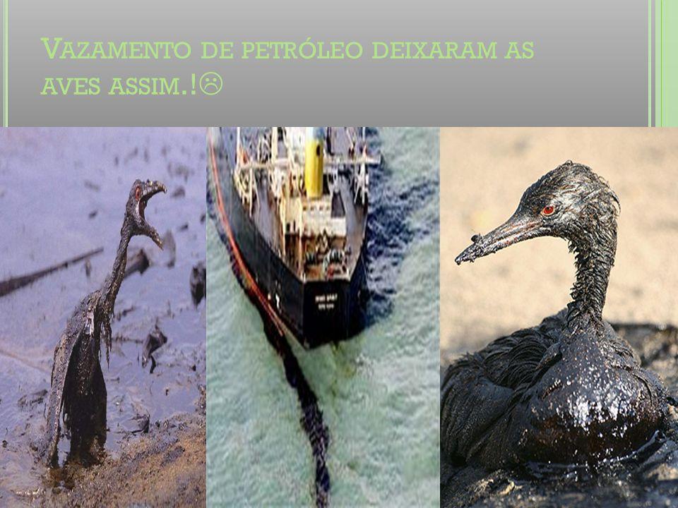 V AZAMENTO DE PETRÓLEO DEIXARAM AS AVES ASSIM.!