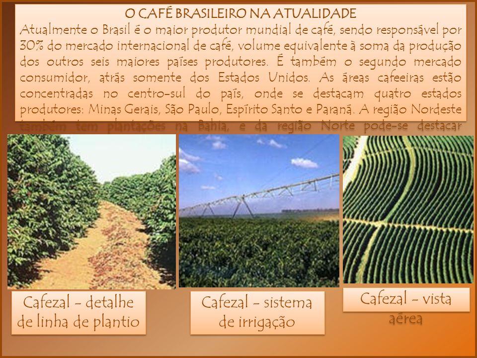 O CAFÉ BRASILEIRO NA ATUALIDADE Atualmente o Brasil é o maior produtor mundial de café, sendo responsável por 30% do mercado internacional de café, volume equivalente à soma da produção dos outros seis maiores países produtores.