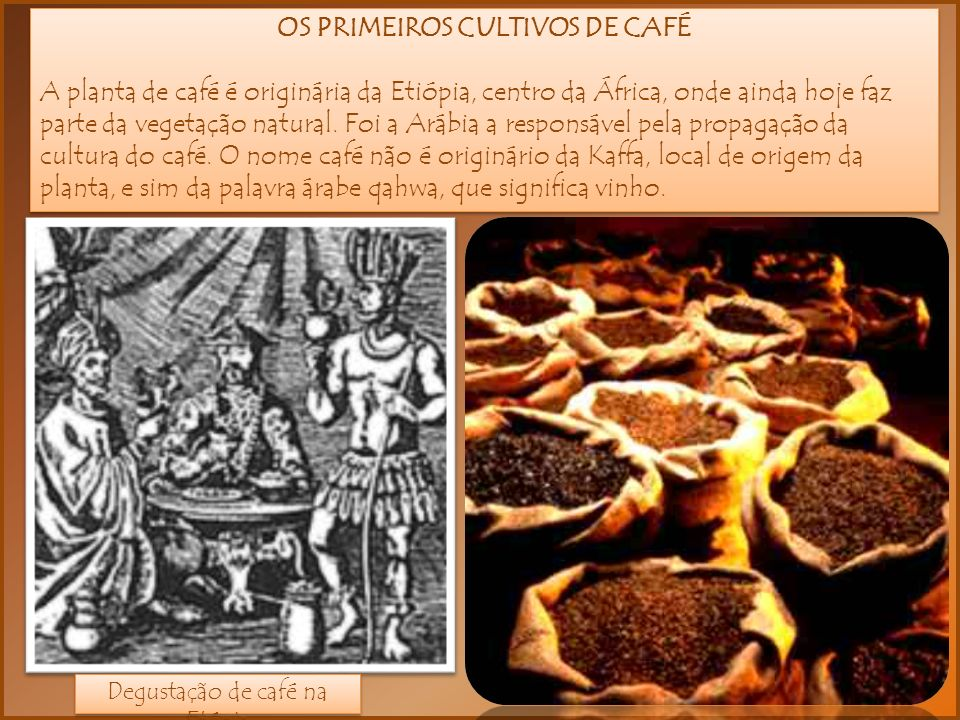OS PRIMEIROS CULTIVOS DE CAFÉ A planta de café é originária da Etiópia, centro da África, onde ainda hoje faz parte da vegetação natural. Foi a Arábia