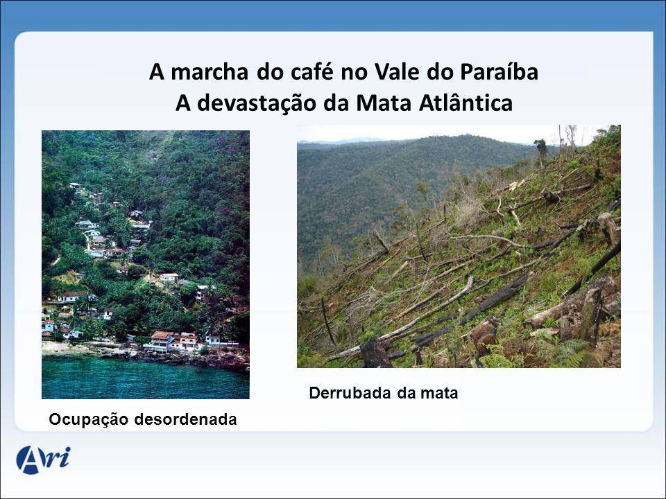 A marcha do café no Vale do Paraíba A devastação da Mata Atlântica Ocupação desordenada Derrubada da mata