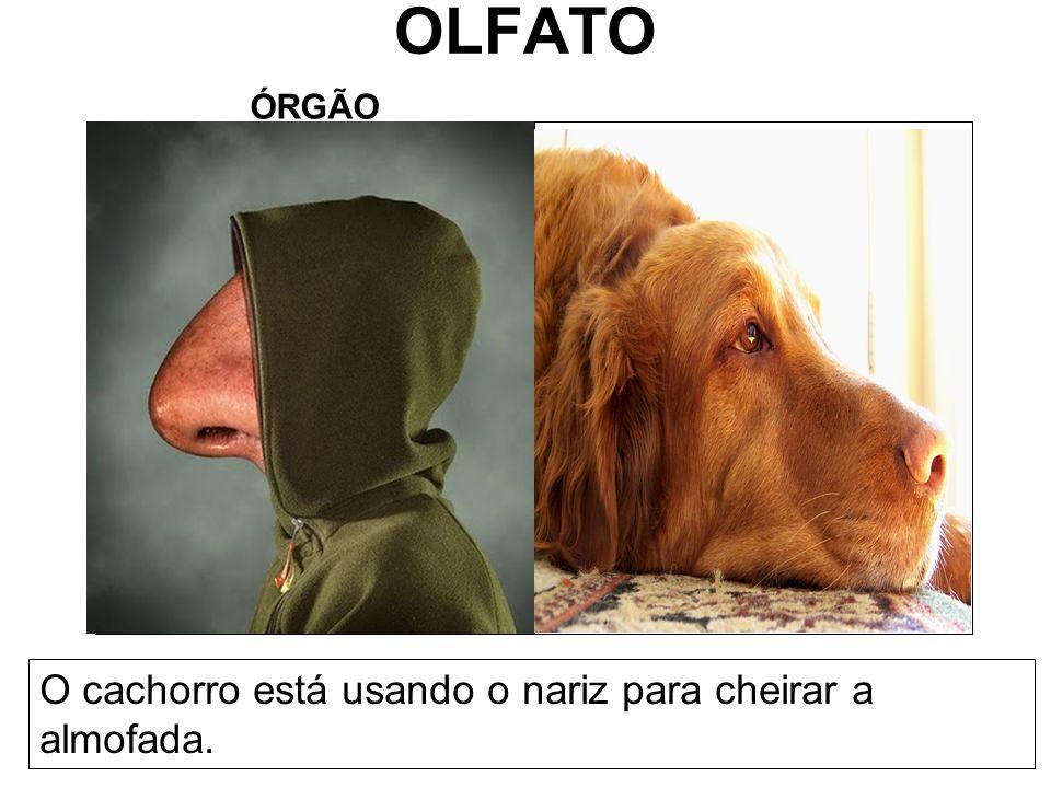 OLFATO ÓRGÃO O cachorro está usando o nariz para cheirar a almofada.
