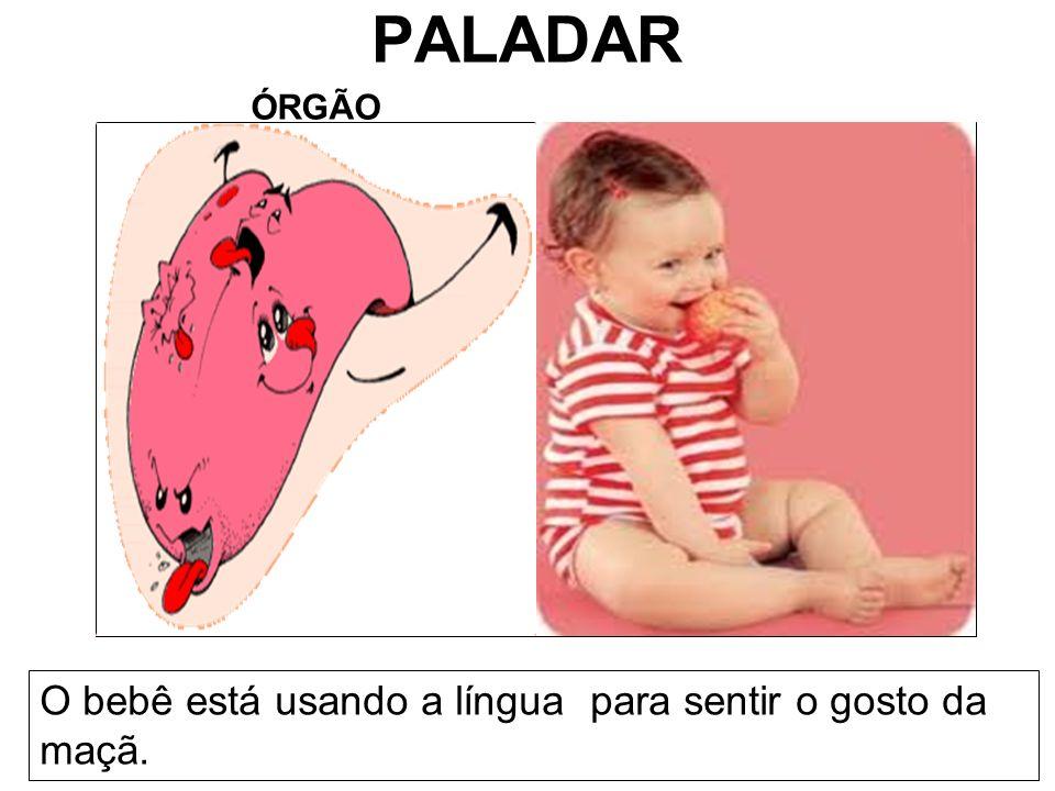 PALADAR ÓRGÃO O bebê está usando a língua para sentir o gosto da maçã.