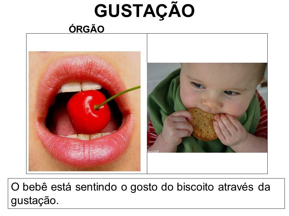 GUSTAÇÃO ÓRGÃO O bebê está sentindo o gosto do biscoito através da gustação.