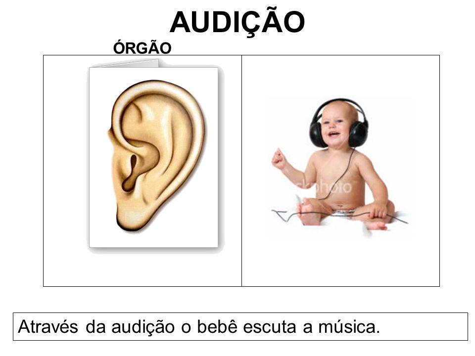 AUDIÇÃO ÓRGÃO Através da audição o bebê escuta a música.