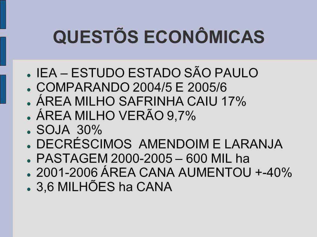 QUESTÕS ECONÔMICAS IEA – ESTUDO ESTADO SÃO PAULO COMPARANDO 2004/5 E 2005/6 ÁREA MILHO SAFRINHA CAIU 17% ÁREA MILHO VERÃO 9,7% SOJA 30% DECRÉSCIMOS AM