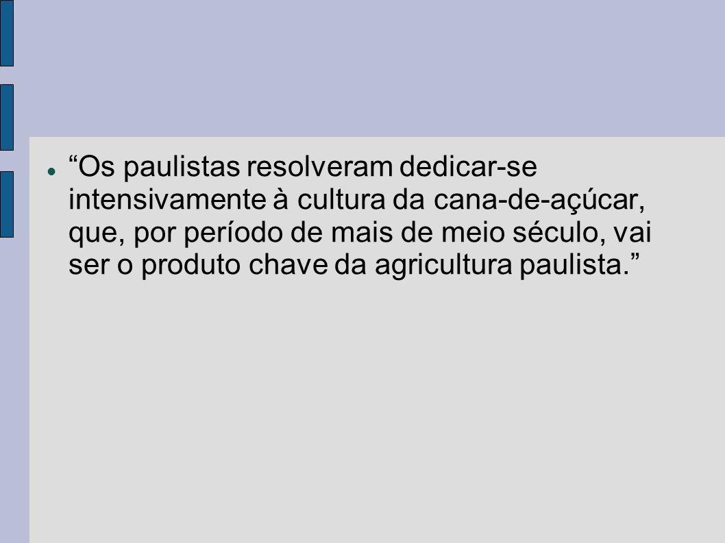Os paulistas resolveram dedicar-se intensivamente à cultura da cana-de-açúcar, que, por período de mais de meio século, vai ser o produto chave da agr