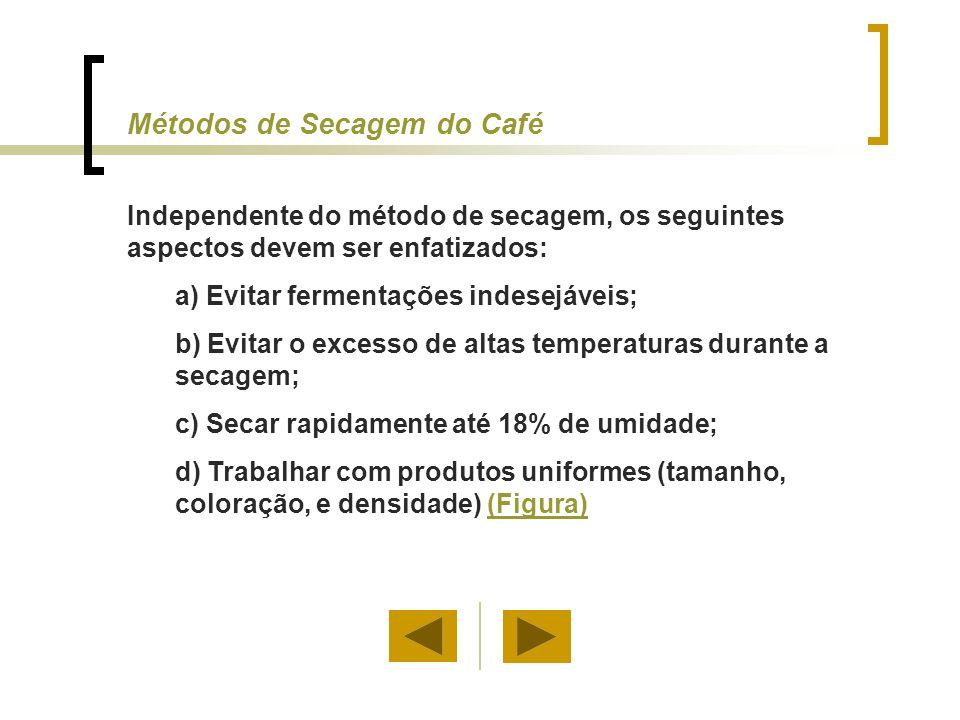 Voltar Secagem Solar (Café Natural)