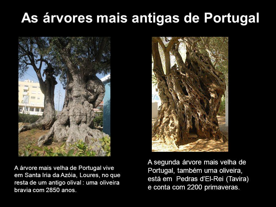 Uma árvore especial: o pau-brasil Os portugueses deram o nome pau-brasil a uma árvore que possuía no interior uma coloração avermelhada que parecia um monte de brasas ou braseiro.
